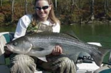 striped bass taxidermy